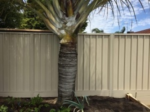 Colorbond fencing in Perth
