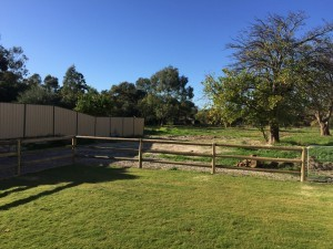 Rural Fences in Bunbury